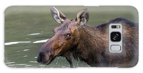 Galaxy Case featuring the photograph Female Moose Head by James BO Insogna
