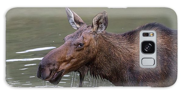 Galaxy Case featuring the photograph Female Moose Head Shot by James BO Insogna
