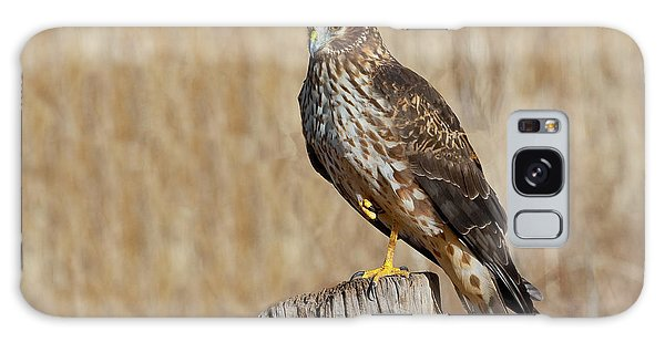 Female Northern Harrier Standing On One Leg Galaxy Case