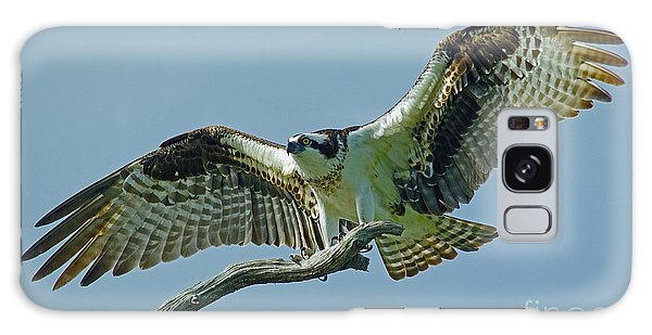 Female Osprey Galaxy Case