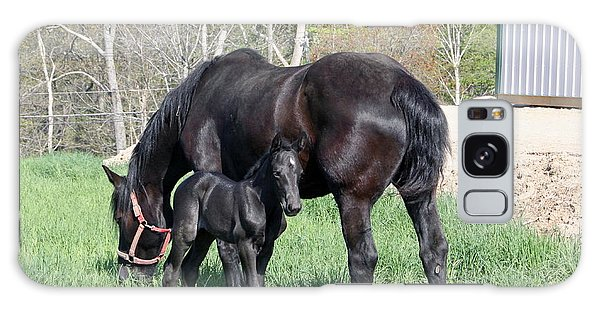 Female Percheron 2 Days Old Galaxy Case