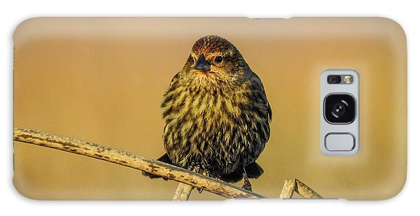 Female Red-winged Blackbird  Galaxy Case