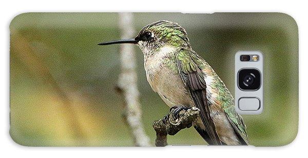 Female Ruby-throated Hummingbird On Branch Galaxy Case