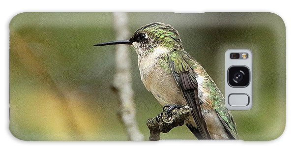 Female Ruby-throated Hummingbird On Branch Galaxy Case by Sheila Brown