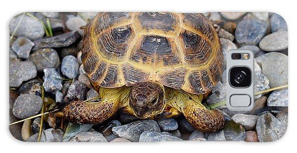 Female Russian Tortoise Galaxy Case