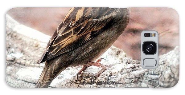 Female Sparrow Galaxy Case