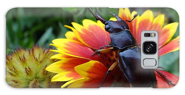 Female Stag Beetle Galaxy Case