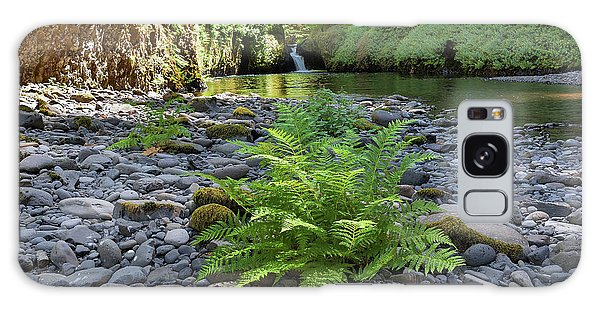 Ferns Along Banks Of Eagle Creek Galaxy Case