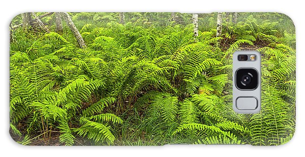 Ferns And Birch In Soft Light Galaxy Case