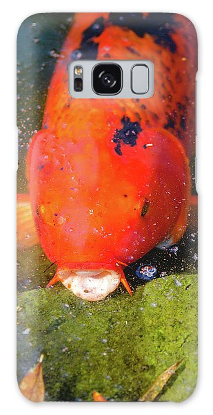 Fish Surprise Galaxy Case