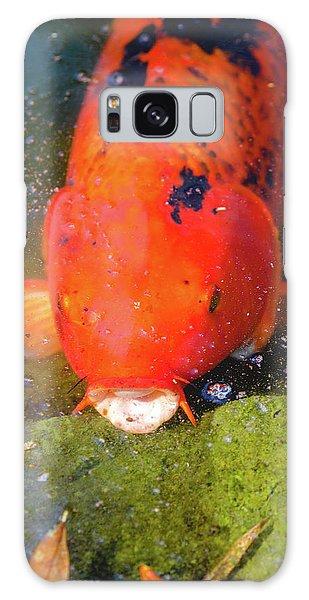 Fish Surprise Galaxy Case