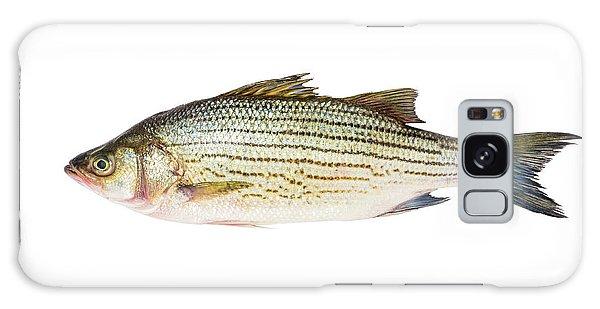 Fish Galaxy Case