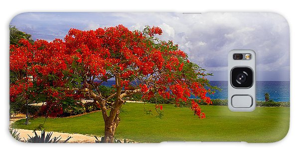Flamboyant Tree In Grand Cayman Galaxy Case by Marie Hicks