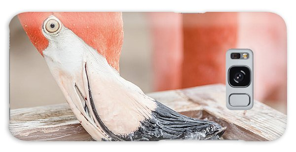 Flamingo At Sea World In Orlando Florida Galaxy Case