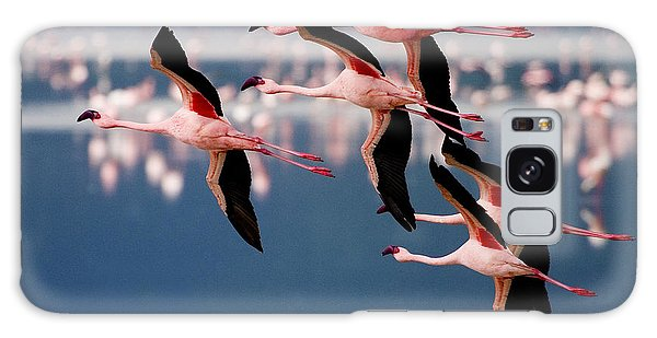 Flamingos In Flight-signed Galaxy Case