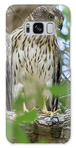 Fledgling Red-shouldered Hawk 2 Galaxy Case