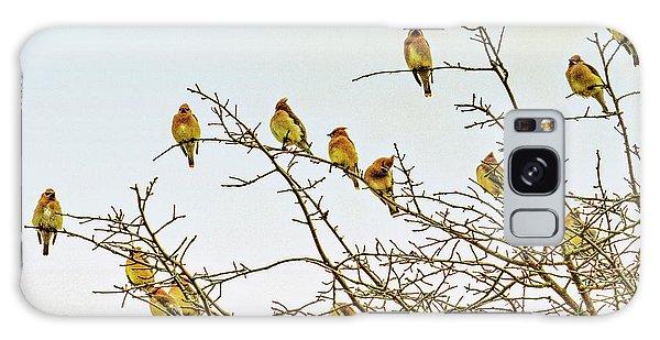Cedar Waxing Galaxy S8 Case - Flock Of Cedar Waxwings  by Geraldine Scull