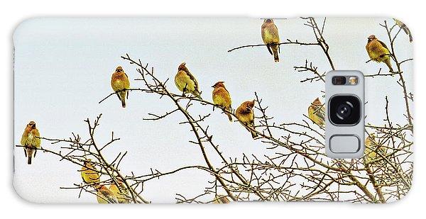 Flock Of Cedar Waxwings  Galaxy Case by Geraldine Scull