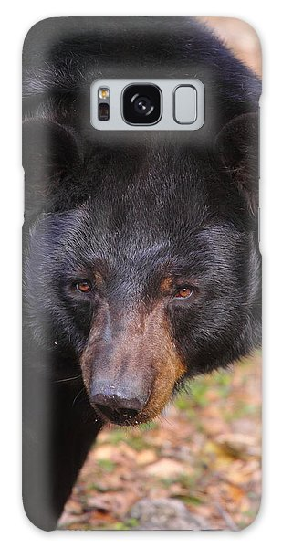 Florida Black Bear Galaxy Case