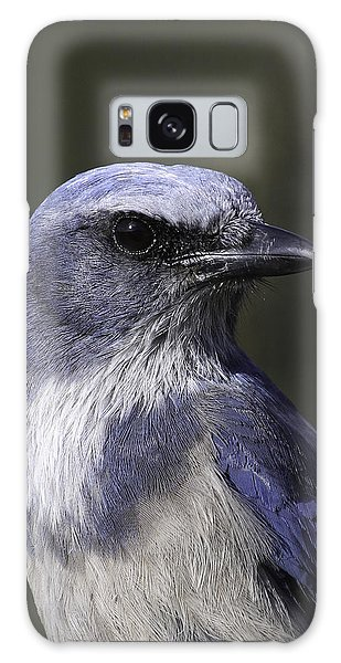Florida Scrub Jay Galaxy Case by Elizabeth Eldridge