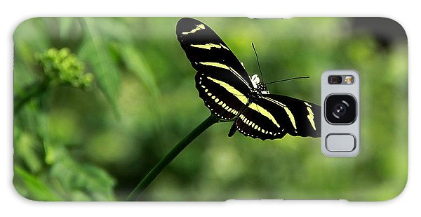 Florida State Butterfly Galaxy Case by Greg Allore