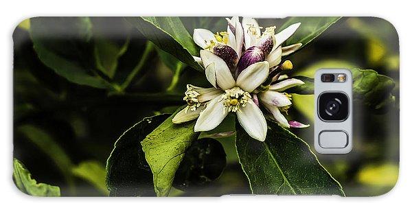 Flower Of The Lemon Tree Galaxy Case