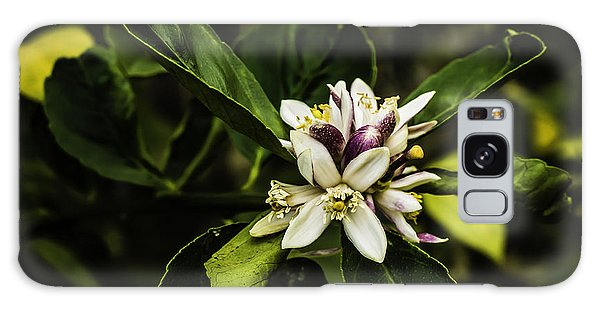 Flower Of The Lemon Tree Galaxy Case
