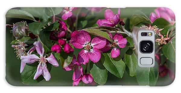 Flowering Crabapple Galaxy Case by John Roberts