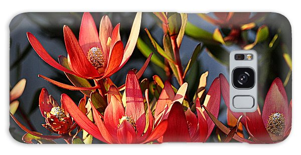 Galaxy Case featuring the photograph Flowers At Sunset by AJ Schibig