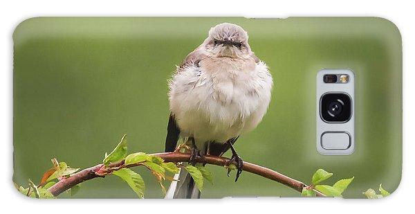 Fluffy Mockingbird Galaxy Case by Terry DeLuco