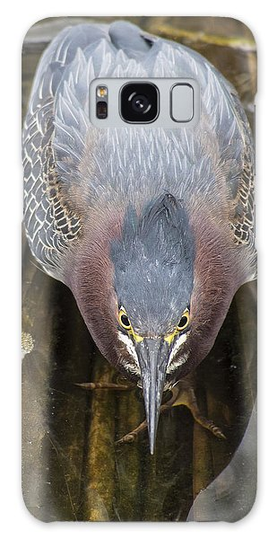 Focused Green Heron Galaxy Case
