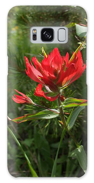 Foothills Paintbrush Galaxy Case