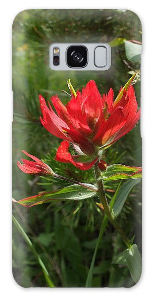 Foothills Paintbrush Galaxy Case by Scott Kingery