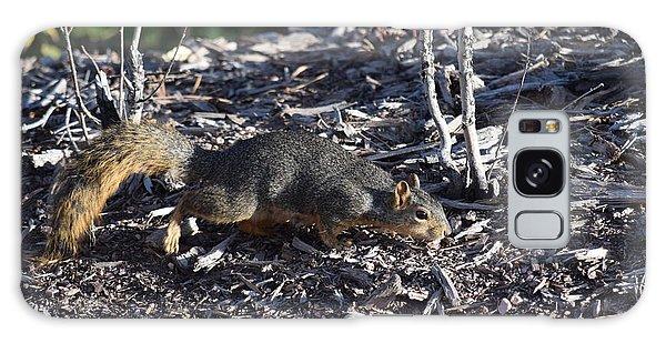 Squirrel Pprh Woodland Park Co Galaxy Case