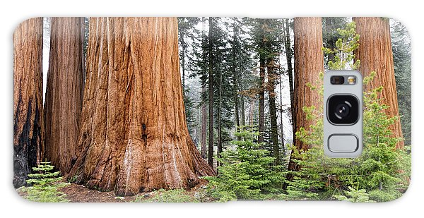 Galaxy Case featuring the photograph Forest Growth by Peggy Hughes