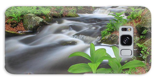 Forest Stream And False Hellabore In Spring Galaxy Case by John Burk