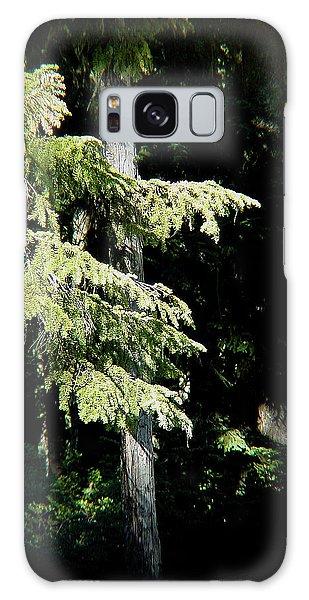 Forest Sunlight - 1 Galaxy Case
