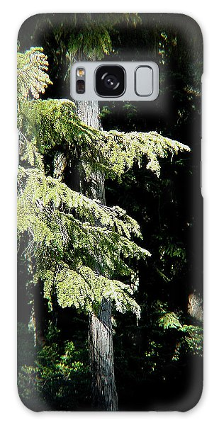 Forest Sunlight - 1 Galaxy Case