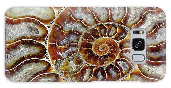 Fossilized Ammonite Spiral Galaxy Case