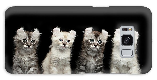 Four American Curl Kittens With Twisted Ears Isolated Black Background Galaxy Case