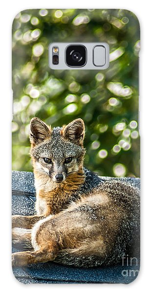 Fox On Roof Galaxy Case
