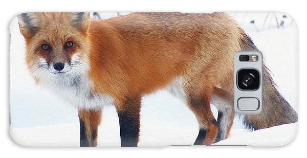 Fox On The Prowl Galaxy Case by Stanza Widen