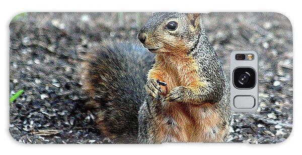 Fox Squirrel Breakfast Galaxy Case