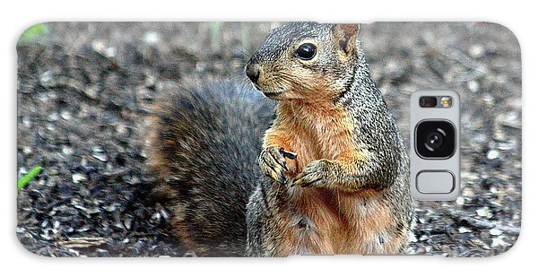 Fox Squirrel Breakfast Galaxy Case by Sheila Brown
