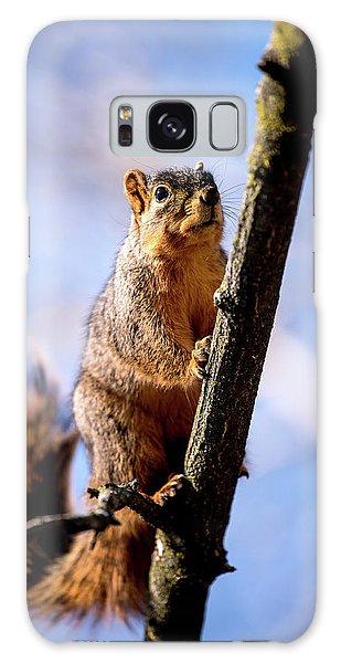 Fox Squirrel's Last Look Galaxy Case