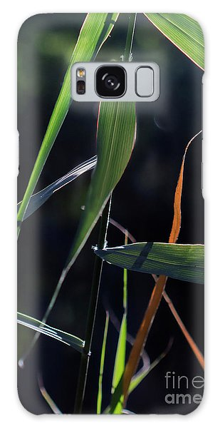 Galaxy Case featuring the photograph Fragment by Linda Lees