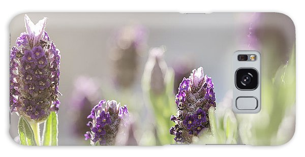 French Lavendar Buds Galaxy Case