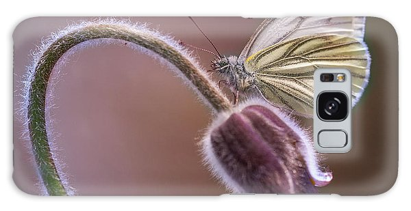 Fresh Pasque Flower And White Butterfly Galaxy Case by Jaroslaw Blaminsky