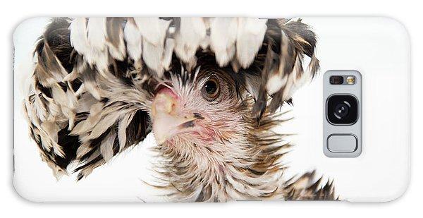 Frizzle Tolbount Polish Hen Galaxy Case
