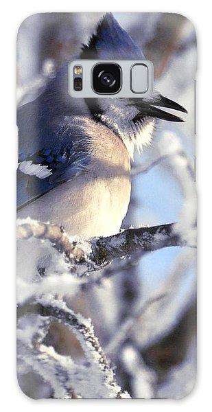 Frosty Morning Blue Jay Galaxy Case